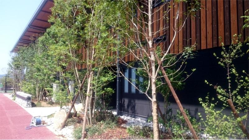 V・ファーレン長崎クラブハウスと植木